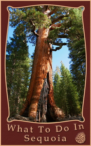 what-to-do-in-sequoia-kings-canyon