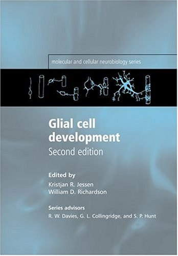 glial-cell-development