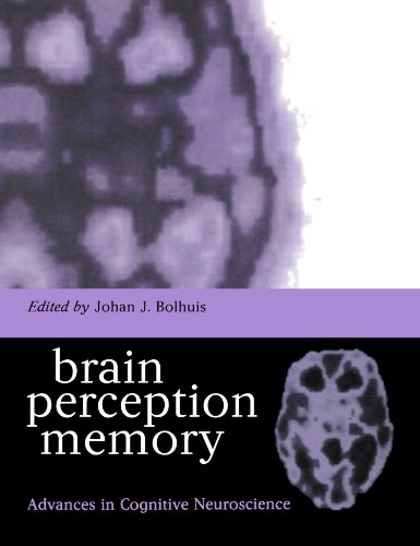 brain-perception-memory