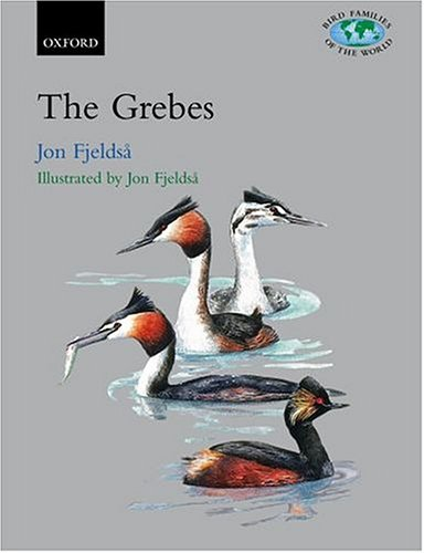 grebes-the